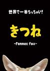 世界で一番ちっちゃい! きつね Fennec fox